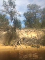 Kangaroo paws on the bank (Figgles1) Tags: flowers river flora kayak paddle kayaking finn gizmo serpentine cultural kayaks iphone serpentineriver kangaroopaw 2015 kangaroopaws aquapac img8697 finngizmo finngizmovision peelpaddlingcarnival