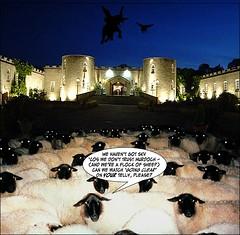 Saint Hill Sheep TV (marknpm1) Tags: uk sky tv sheep satire documentary scientology rupert murdoch hbo shoop mistrust airs markpm marksshoops marknpm