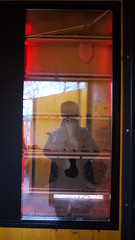 DMC-G2 - P1590210 - 2013-04-10 16-54-26 (archive_diary) Tags: schönbrunn vienna wien portrait selfportrait reflection zoo austria österreich play framed web spiderweb tunnel bee frame worker chrysalis kran beehive spiegelung glas tiergarten rahmen netz puppe schmetterling biene spielplatz klettern spielen schildkröte palmenhaus füttern pfau arbeiter glasscheibe crysalis rutsche scheibe honigbiene glashaus bienenstock gerahmt fassadenkletterer bienenwabe baumwipfelweg ausderhandfressen 1042013 ifbachwouldhavekeptbees krysalis schaubienenstock
