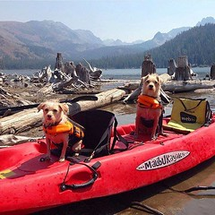 Dogs on a Malibu Kayak