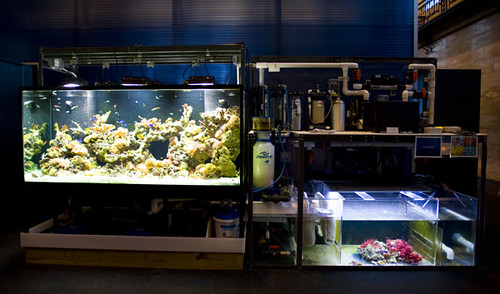 Educational 500 gal. Reef - New Bedford Oceanarium - MA - 1