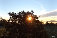 colori e nebbie del sorgere del sole in Brianza (Italy) (memo52foto) Tags: italien autumn italy sun sol fog sunrise automne soleil europa europe italia nebel alba herbst eu aurora sole nebbia sonne autunno lombardia niebla brouillard italie madrugada brume ue oto lombardy aube lombardie morgenstunde nebbie lombardei tagesanbruch morgenrote