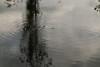CH4 (gripspix (OFF)) Tags: reflection water wasser mud surface spiegelung schlamm ch4 greenhouseeffect oberfläche wavelet methan treibhauseffekt kleinewellen sapropel wellenringe faulschlamm 20151006 sumpfgas
