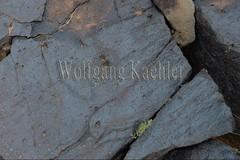 30095312 (wolfgangkaehler) Tags: old rock asian ancient asia desert mongolia centralasia petroglyph gobi blackmountains petroglyphs mongolian gobidesert southernmongolia