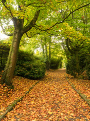 Autumn Path October (frcrossnacreevy) Tags: autumn october 1001nights 2015 olympusem1 olympusmzuiko1240mmf28