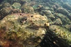 plongée du 8 novembre