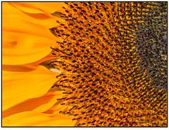 img_1087 (tuxoche) Tags: flickr orte jahr deu facebook deudeutschland geolocation 2015 canonphotography bilddestages veröffentlicht flowercolors lightroompresets camera:make=canon exif:make=canon macroaddict camera:model=canonpowershotg5 exif:model=canonpowershotg5 exif:lens=72288mm exif:aperture=ƒ40 2published hqsppromotion google2048 hqspmacro 112015s exif:isospeed=50 googlereshares fb2015 shared2015 exif:focallength=288mm 0flickrpublished 062015s 1pinterestpublished 4deleteflickr fbhobbyphotographer2015 fotocommunity2015 lovephotography2015 piflora2016