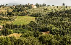 Tapestry (Elliott Bignell) Tags: italien italy landscape italian italia vineyards tuscany hillside toscana cypresses italie toskana tuscan italienisch zypressen montespertoli viamontetermini