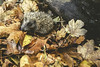 Tardor (Aicbon) Tags: verde animal hojas mammal europa europe autum cachorro otoño hedgehog erizo cria puas erinaceuseuropaeus eriçó hérissons erinaceinae motorolamotog mamiferoseuropeos