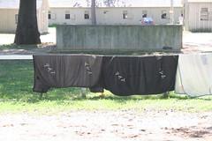 TAP everywhere (Kellsboro) Tags: nyra saratogaspringsny saratogaracecourse toddpletcher