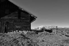 Almhütte mit Alpenpanorama, b&w