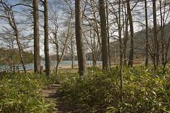 IMGP5051 (roughlegged) Tags: photography pentax k3ii apsc japan travel wanderlust lake woods beach nikko