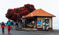 Hand in Hand (Jocey K) Tags: newzealand akaora scene tree ratatree flowers people akaroaharbour shop mist building rainning clouds telephonebox signs car bankspeninsula