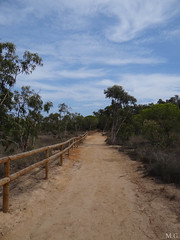 Camino (Maribeljukebox) Tags: parquenatural lagunas lamata torrevieja naturaleza nature flamencos flamingos sky trees blue