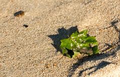(klgfinn) Tags: autumn balticsea landscape leaf sand sea shore