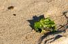 Осень на берегу (klgfinn) Tags: autumn balticsea landscape leaf sand sea shore балтийскоеморе берег лист море осень пейзаж песок