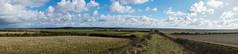 Devil's Dyke Walk-12 (adambowie) Tags: devilsdyke cambridgeshire newmarket