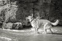 IMGP3371 (jamin.sandler) Tags: pentaxistds palmachimbeach dog promasterspectrum728210mmf4265