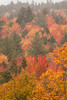 Mountain Tapestry (gerilynns) Tags: whitemountains newhampshire foliage colorful trees mist rain steep outdoors autumn fall