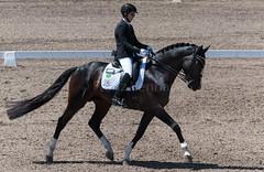 161023_Aust_D_Champs_Sun_Med_4.3_6614.jpg (FranzVenhaus) Tags: athletes dressage australia siec equestrian riders horses performance event competition nsw sydney aus