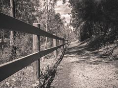 Fence (Anthony's Olympus Adventures) Tags: adelaide australia path fence angle blackandwhite blackwhite monochrome grayscale perspective walk track view natural woodenfence pathway walkway olympusem10