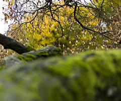 "In a tree (Vidar ""the Viking"" Ringstad, Norway) Tags: autumn fall cold rainy trees tree branches twigs leaf moss old colours colors pov sky outdoor naturepic natureshot nature canoneos5dmkiii botaniskhage oslo norge norway norwegen"