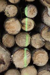 ckuchem-7077 (christine_kuchem) Tags: abholzung baum baumstmme bume einschlag fichten holzeinschlag holzwirtschaft wald waldwirtschaft