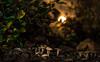 IMG_1914 (::Lens a Lot::) Tags: paris | 2016 carl zeiss jena tessar red t 50mm f28 q1 1954 12 blades iris m42 flower plant bokeh depth field closeup color blossom vintage manual ddr east german germany classic fixed prime lens drop rain water extérieur fleur plante profondeur de champ night light pink purple green mushroom effet flou wow