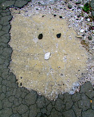 A cat named Rocky (Hilarywho) Tags: face foundface pavement crackedasphalt detroit rockface catface