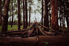 A fire without fire (andresvelezu) Tags: forest bosque trees tree árboles arbol nature naturaleza fogata woodfire wet sticks palos madera wood nikon nikond750 d750 d750nikon 50mm