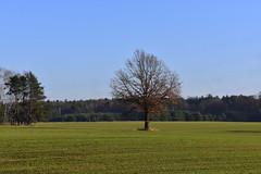 Polish landscape (eowina) Tags: poland lanscape vievs village autumn tree