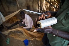 FAO supports farmers in Aweil (FAOemergencies) Tags: fao food agriculture crops cultivation cultivators farmers farming fish foodsecurity sorghum aweil northernbahralgazal southsudan emergencies africa fisheries sourthsudan conflict crisis fisherers
