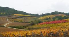 Vineyards, Chateau de Serres (Niall Corbet) Tags: france languedoc roussillon occitanie chateaudeserres serres vine vineyard vignoble autumn aude red
