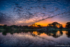 Morning Glow (DonMiller_ToGo) Tags: hdr dusk cloudporn sunrise 3xp hdrphotography nature onawalk outdoors sky florida venicerookery goldenhour rookery clouds
