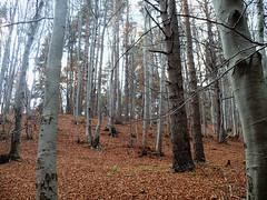 untitled. (eunoia ecoas) Tags: autumn autumnal forest trees leaves fall ecoas eunoia ethereal melancholic nostalgic nature woodland wood landscape soft solitude dreamy dark