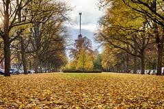 Parklaan Autumn (R. Engelsman) Tags: autumn herfst leaves bladeren euromast parklaan rotterdam 010 netherlands nederland nl hdr rotjeknor holland foliage tree serene fall outdoor bomen scheepvaartkwartier