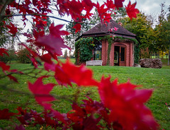 A tea room (Mayur Shivz - Out and about casual photography) Tags: tea room beautiful picture perfect serene vibrant green red fall winter autumn season maple leaves olympus omd em5 panasonic lumix 1235 m43 mft bodenham arboretum kidderminster midlands england great britain