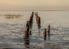 Buhne (Re Ca) Tags: norddeutschland harlesiel buhne sunset sonnenuntergang canon eos70d sigma1770mm herbst autumn natur nature landscape landschaft seascape nordsee