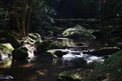 Oct2016 South Mtn State Park 21 (furrycelt) Tags: jacobsforkriver jacobsfork nikon85mmf14afd nikon85mmf14 northcarolina southmountainstatepark southmountains ianwilson jianwilson photographersoftumblr 85mm d600 nc nikon october autumn fall forest furrycelt leaves lensblr natural nature river rocks sunlight trees water woods