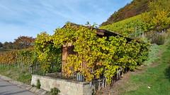 Weinberghuschen  -  House in the Vinyard (joe-so) Tags: weinberg wine winyard house trauben grapes berg winery