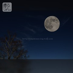 (finalistJPN) Tags: moon bluemoon supermoon thankyoufans goodlucktousall discoverychannel nationalgeographic shigakogenheights japanalps summits pasture peacefulpicturesarepriceless ppap pictaro farm discoverjapan visitjapan