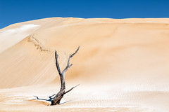 Tree and sand #6 (RWYoung Images) Tags: rwyoung canon 5d3 tree sand sanddune arid deadtree southaustralia quantumentanglement