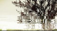 L'arbre dans le paysage (Sebmanstar) Tags: couleur color creation creative creatif transformed work pentax photography abstract abstrait art imagination imagine manipulation nature research forêt forest digital photoshop