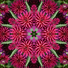 Kaleido Abstract 1552 (Lostash) Tags: art patterns symmetry shapes textures kaleidoscopes abstract nature flora