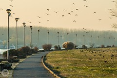 Drava walkway (ristic.vedran42) Tags: osijek croatia nikon d3200 telephoto 70300mm drava walkway birds sunset nikond3200 pattern tamron