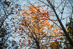 Bankhead National Forest (MikeyMcInnis) Tags: alabama forest fall autumn weekend getaway thanksgiving leaves leaf pinecone beach nature photography vibrant autumnal trees negative space arty composition