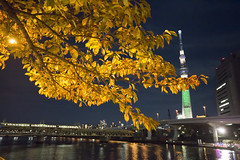 Landscape | Sky Tree  ( aikawake) Tags: maple leaves tree tokyo skytree    nightview night landscape beautiful awesome reflection river japan nippon light train