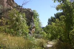 Acer negundo (brian dean bollman) Tags: uintahcountyut sapindaceae acer acernegundo boxelder dinosaurnationalmonument acernegundosspinterius