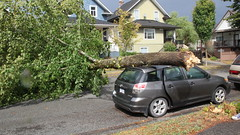 Tree Crashed on a Car (bcfiretrucks) Tags: road trees light house canada storm news fall car rain weather vancouver photo bc wind branches columbia sidewalk fallen damage british daytime incident linbs bcstorm