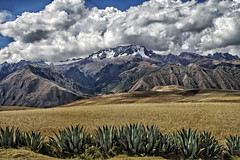 Chiqun and  barley fields (Daniel Schwabe) Tags: travel mountain snow peru field barley cusco fields agave chikun